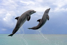 Fins and Flippers / dolphins, whales, otters, seals, and other sea animals