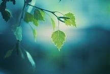 tree by leaf / Bark and branch and green. / by Julie Wimberley
