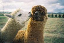 Animals / by Magdalina Danelia
