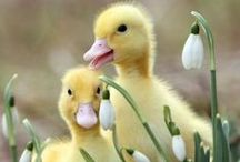 SPRINGTIME / Spring Is Mother Natures Celebration Of Bringing New Life To God's Creatures And  Re~Awakens Us With A Beautiful Color Palette, Warm Sunshine And Happy Spirits After A Long Winter's Nap. / by Sandy Czarnetzke