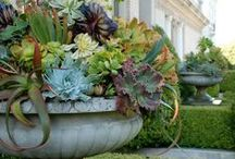 Fun with Containers / No yard? No problem! Fun and beautiful arrangements for container planting with less water.