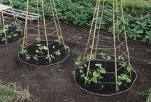 gardening / by jennifer lawrence