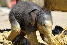 Wonder of Elephants / by Sue Blanchard