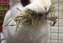 lagamorph / bunnies ,hares and pikas