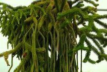 As Hue Like It: Verdure