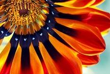 Color splash / Bright, vibrant hues / by Heather Gjerde