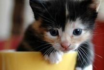 Teacup Kitties / by Heather Gjerde
