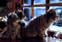 Cats / by Maria Kruglova