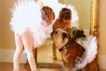 Gotta Dance / by Darlene Lourenco