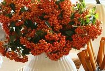 Fall Ideas / Fall bursts into bloom with red, orange and yellow. Celebrate fall with crafts, recipes, activities and decor.