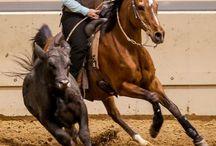 Denali  / board for my horse / by Jessie Korver