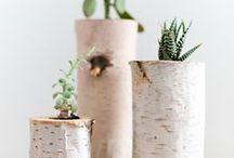 DIY mit Birkenholz