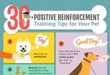Positive Reinforcement Dog Training / Tips and tricks for training you dog the positive way. Everyone in the family can participate.
