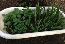 Bathtub Gardens