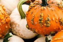 Autumn ~ Halloween