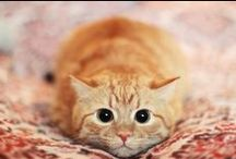 FUN - Cats, Cats, & Cats / Cats and kittens galore. All the funny and cuteness in one board to brighten your day! Feel free to pin all the cat posts here! :)