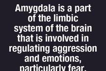 Angst / Angst, paniek en hyperventilatie aanpakken met inzicht en oefeningen.