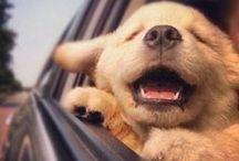 Cute Animals / by Ashley S