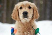 Cute & Cuddly / by Kate Castronovo