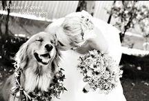 Our wedding ideas / by Jenn Palomo