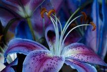 Flower•Power / by ❥Stephanie Nicole