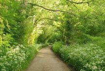 travel :: paths