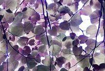 Purple & itsy bitsy Blue