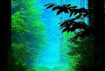 The tale of the great green forest