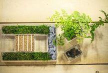 Acrylic pot for succulent plants / Clear modern acrylic_pot for succulent plants. #gift #idea #succulent #plants Shop online: http://bit.ly/14YJkel  / by Designtrasparente shop online