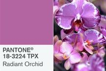 Pantone Color of the Year 2014 - Radiant Orchid / Pantone Color of the Year Radiant Orchid + Canvas Prints