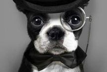 Animals Wearing Bow Ties / Like a Sir...