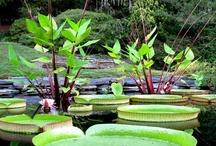 Duke Gardens / by Duke University