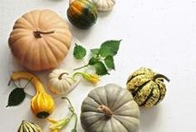 Feeling Like Fall / Recipes and ideas to enjoy this crisp, cozy and flavorful time of year. / by 34 Degrees
