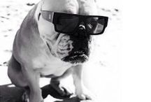 Dogs in Shades / Can't get enough pets in sunglasses! So funny.
