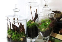 Garden ~ Terrariums / Gardening with Terrariums