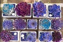 Succulents / Succulents are back! These beautifully colored and easy-to-care for plants are taking over the gardening world!