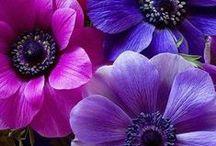 Flowers/Garden / by Diane Gabriel-Vodzak