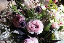 Nature ~ Fleurs ~ Verdure ~ Plantes