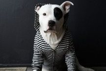 Doggies. / by Karen Olson