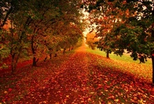 Fall~ / by Shelby Becker Wallace