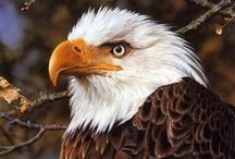 Eagles & Owls