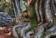 Trees / Beautiful Trees!