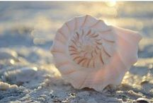Shelling / Don't let summer slip by without a little fun. Make the most of it with these ideas for things to do here.  / by The Beaches of Fort Myers & Sanibel Florida