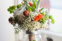 Blooms, flowers, plants