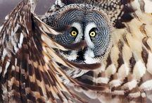 Bird photos / by Susan Stevenson
