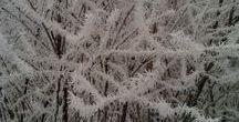Zima(Winter) / Winter