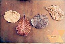 :: Autumn days