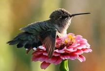 Lil' Birdies