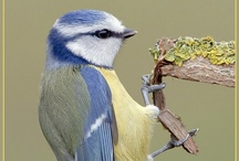 CRITTERS - Beautiful Birdies / Because watching the birds is like therapy to me