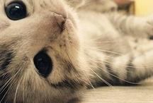 Cats / by Marissa Cataldo McAneney